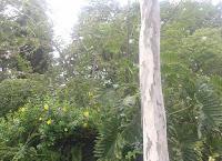 Objetivos da lei da proteção e a utilização do Bioma Mata Atlântica. Lei 11,428/06