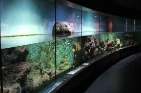 DIY Aquarium Tips: How to Make Homemade Fish Tank