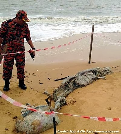 [Another] Mysterious Creature Washed Up in Santubong 12-28-13