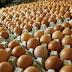 Cara sukses menjalankan grosir telur ayam