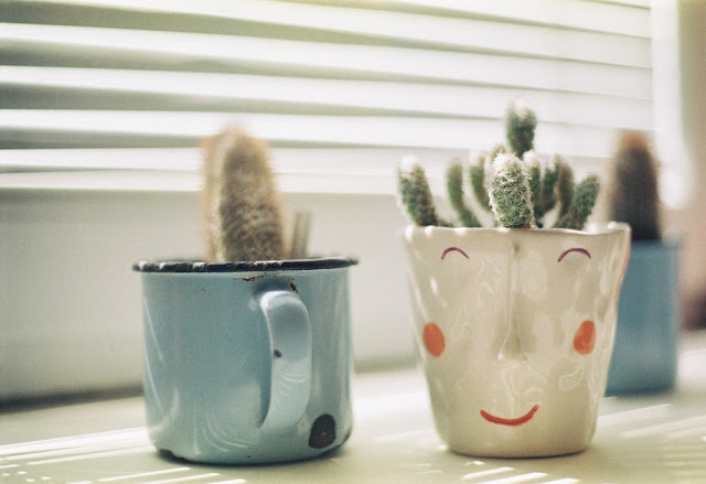 kaktusi u teglicama