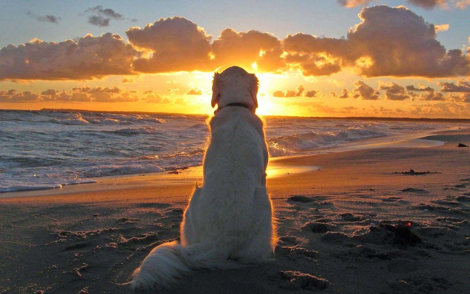 Hond bij ondergaande zon aan zee