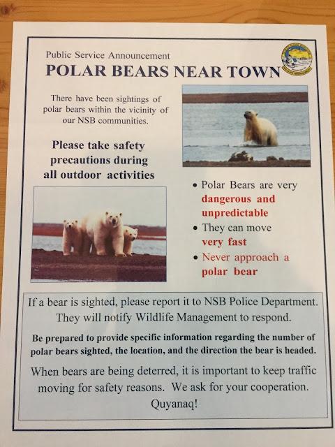Barrow Alaska Polar Bear Watching