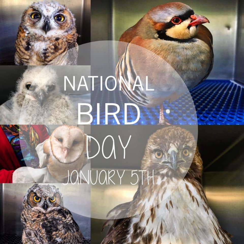 National Bird Day Wishes Images