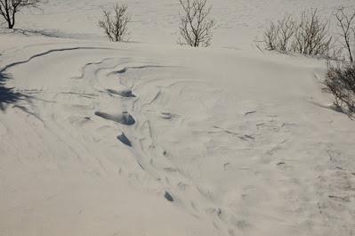 windswept snow