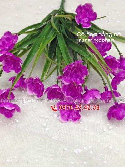 Phu kien hoa pha le o Ba Dinh