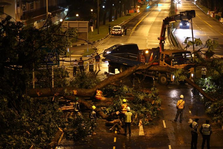 A fallen tree outside Neptune Court at Marine Parade is blocking three lanes of traffic.