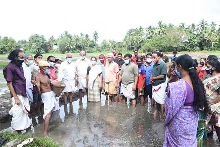 Paddy cultivation started on 4 acres of fallow land