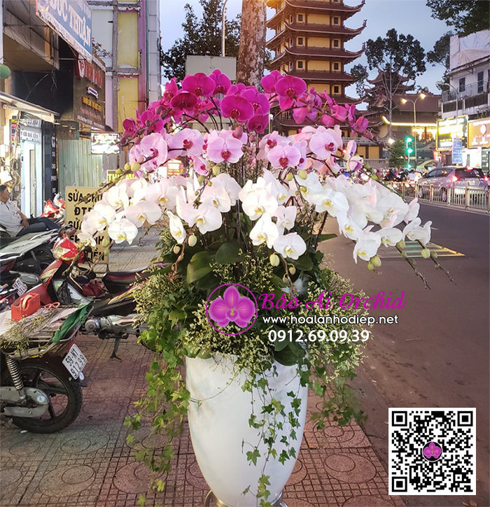 ✪  Ngây ngất với hàng trăm mẫu Hoa Lan Hồ Điệp biếu tết 2021 siêu đẹp