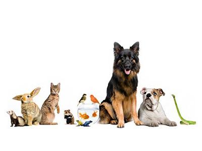 Lowongan Kerja Sebagai Crew Di Pet Shop Area Bandung