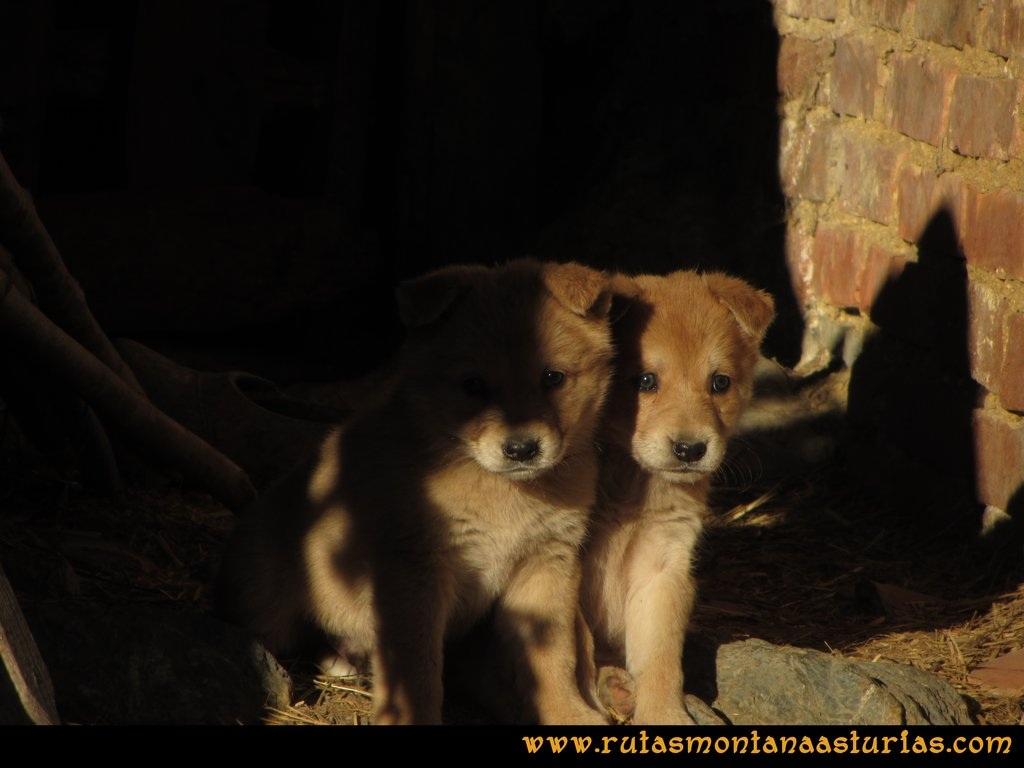 La Airúa Naval: Saliendo de Tene, dos cachorros