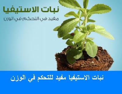 وداعا للسكر الضار مع نبات الاستيفيا الامن والمفيد للصحة