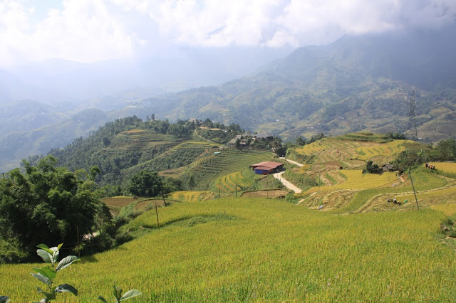 The Best Time To Visit Terraced Fields In Sapa, Vietnam 3