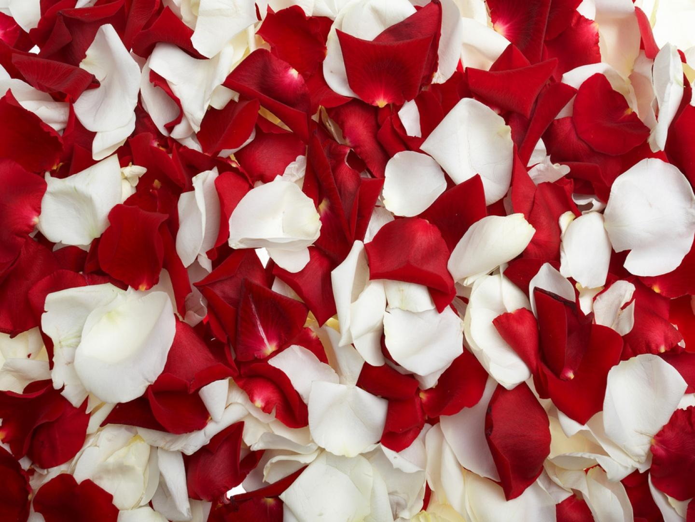 Tarot Sin Secretos Significado De Los Sueños Soñar Con Pétalos De Rosa