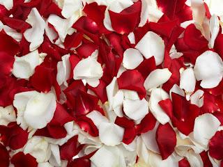Significado de los Sueños: Soñar con Pétalos de Rosa