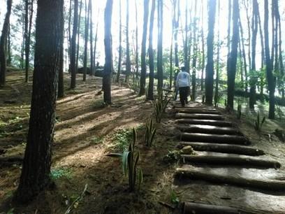 Wisata Alam Hutan Pinus Mangunan Imogiri