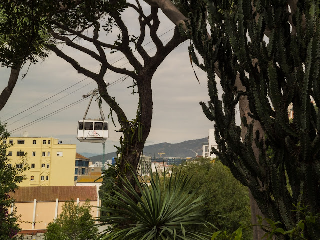 Trees in front of a cable car and apartment blocks in Gibraltar.
