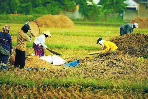 Contoh Soal Pendidikan Contoh Bidang Usaha Agraris