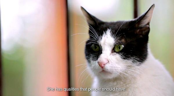 istanbul kedi