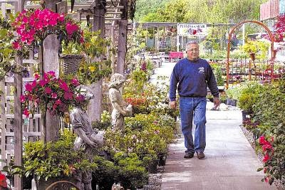 Alladin Nursery Was Founded In 1919 By Niels Peter Jensen Of Denmark And 1946 Purchased Ben Dorothy Roth The Roths Grew Whole Bedding