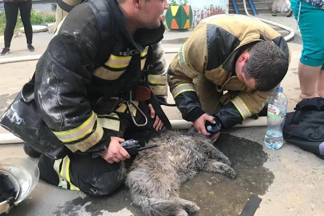 Чудесное спасение кошки Мурёнки при пожаре в Волгограде попало на видео