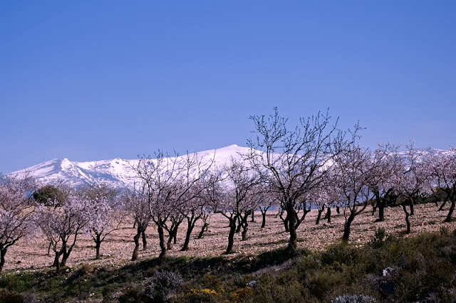Clima na Sierra Nevada