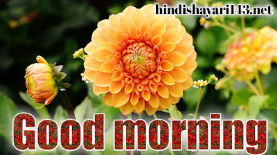good morning flowers photos pictures wallpaper images free download