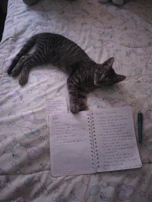 Un gato que lleva el nombre del daimonion del libro luces del norte por Phillip Pulman
