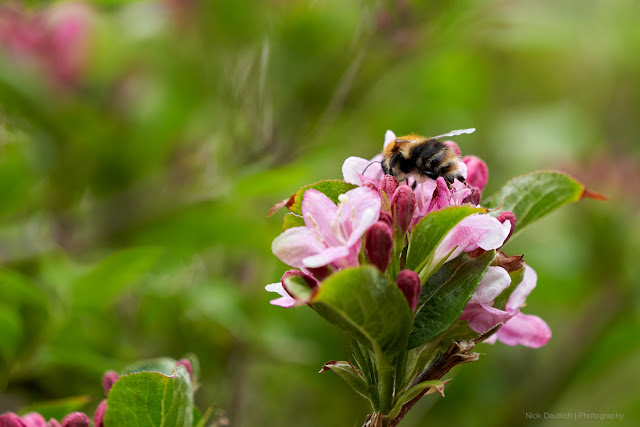 Focus was on the bee ensuring sharp details with a shallow depth of field