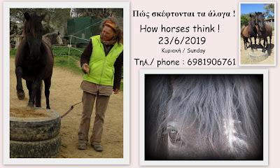 Πώς σκέφτονται τα άλογα !