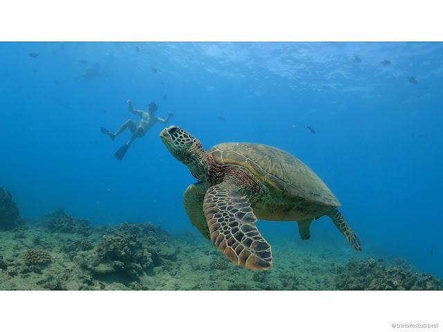 Turtle Snorkeling Adventure with Pink Sails Waikiki