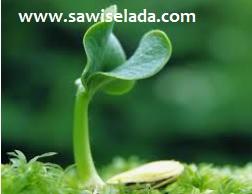 Faktor faktor yang dapat mempengaruhi pertumbuhan tanaman