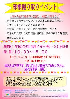 チューリップ球根掘り取りイベント<4/29,4/30>