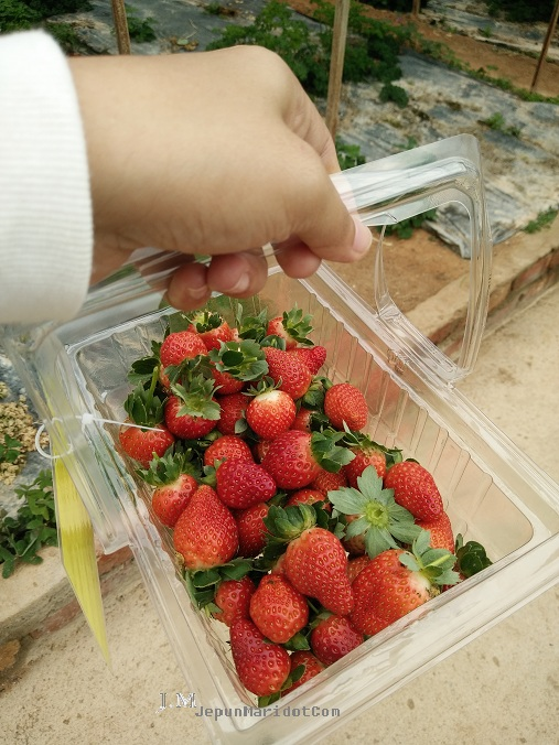 Cameron Highland : Dari Kea Farm ke Big Red Strawberry Farm