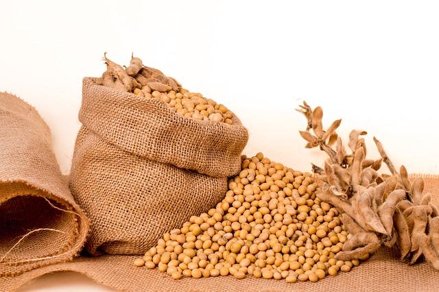 z soi powstaje niezdrowy olej sojowy