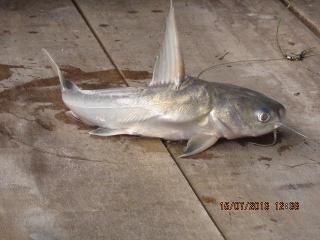 Jom Pancing Lepak Tepi Laut Kaum Kerabat Ikan Duri