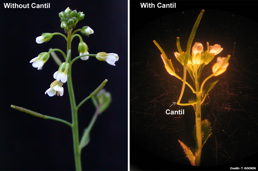 Scientist Discovered A Whole New Organ On 'World's Best-Studied' Plant After Years Of Research
