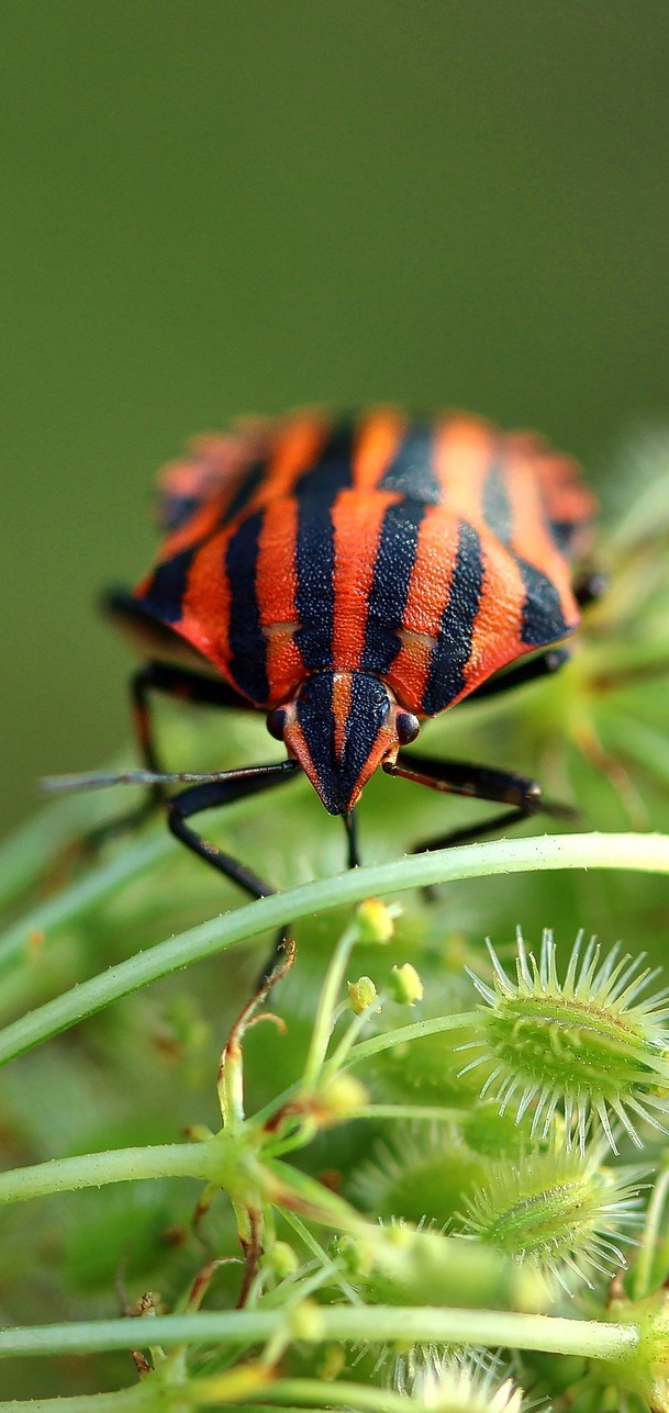 Picture of a shield bug.