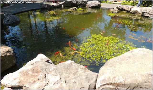 Dallas Arboretum & Botanical Garden: Genesis Garden
