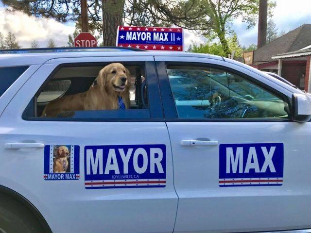 chú chó tên Max làm thị trưởng