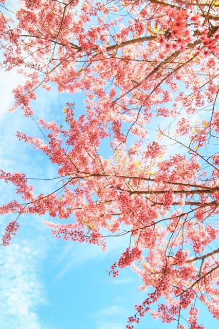 Chiêm ngưỡng vẻ đẹp tuyệt trần của vùng ngoại ô Đà Lạt 13
