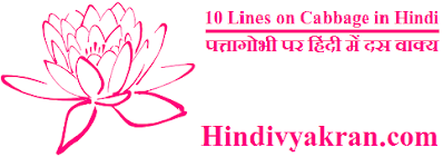 10 Lines on Cabbage in Hindi पत्तागोभी पर हिंदी में दस वाक्य
