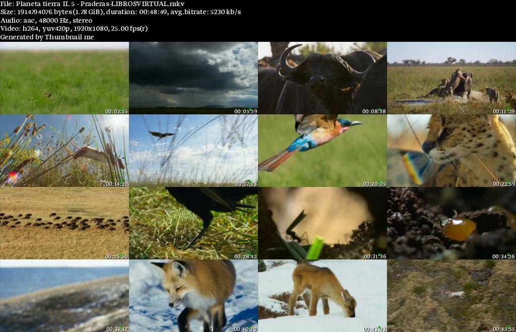 Planeta Tierra II: 5 – Praderas [BBC – HD1080p]