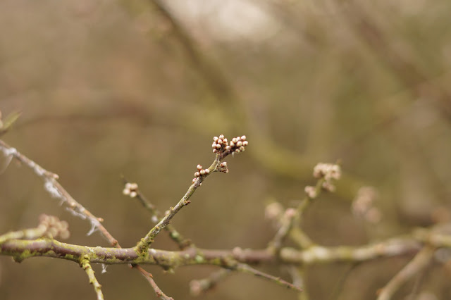 early spring in the sticks