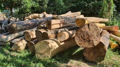 """Vì sao gỗ lậu """"lọt"""" qua trạm kiểm lâm vận chuyển ra khỏi rừng?"""