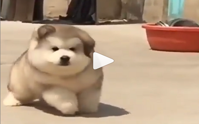 DOG VIDEO FUNNY