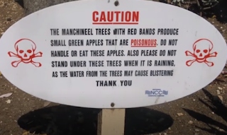 manchineel caution board