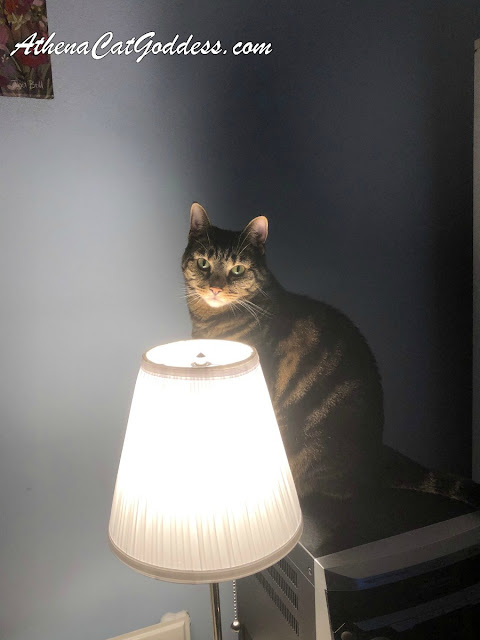 Tabby cat stands behind ÅRSTID table lamp