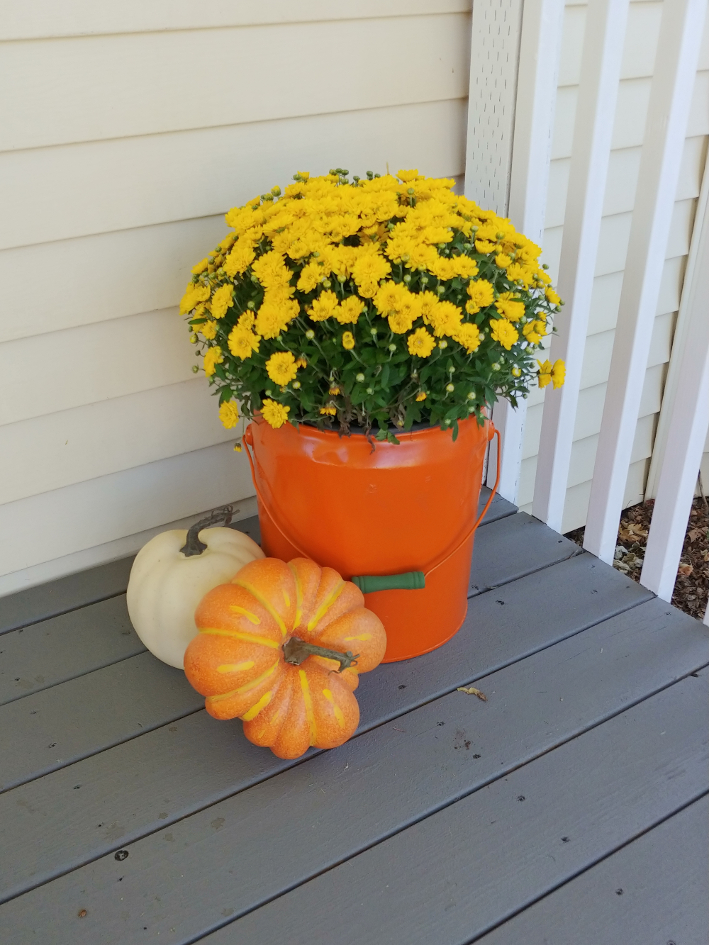 orange bucket with yellow mums for fall