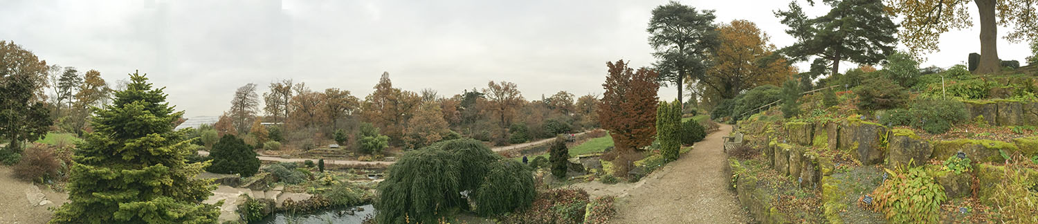 Panoramic view including rock garden.  Wisley Gardens, 3 December 2013.